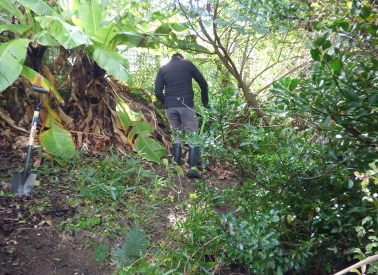 Clearing ground with Wairau Valley Special School landscape designers and practitioners